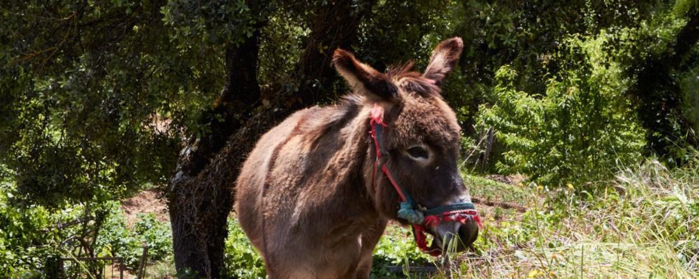 Fauna de la zona de las casas rurales en Yeste - Casas Rurales Amable