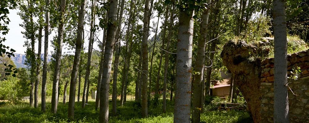 Vistas de la zona de Yeste - Casas Rurales Amable